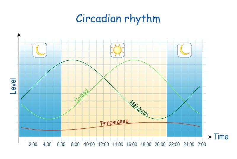 """El ritmo circadiano se define como los """"cambios físicos, mentales y conductuales que siguen un ciclo diario, y que responden, principalmente, a la luz y la oscuridad en el ambiente de un organismo"""""""