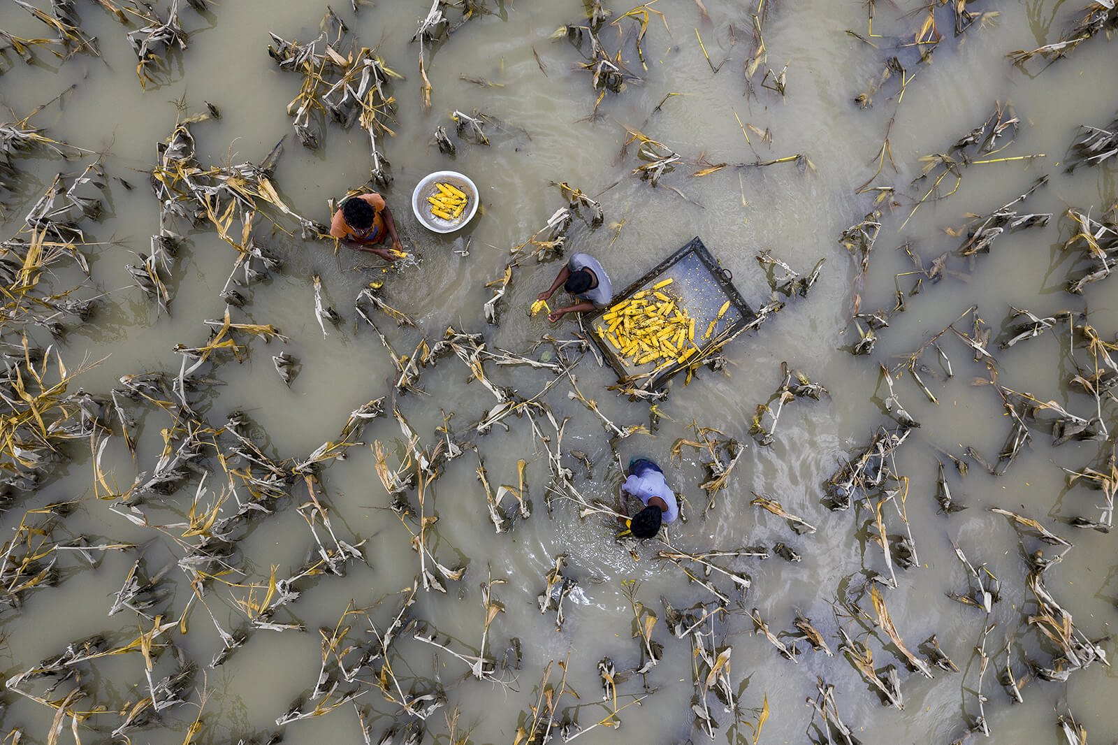 Flood Water has Damaged Crops