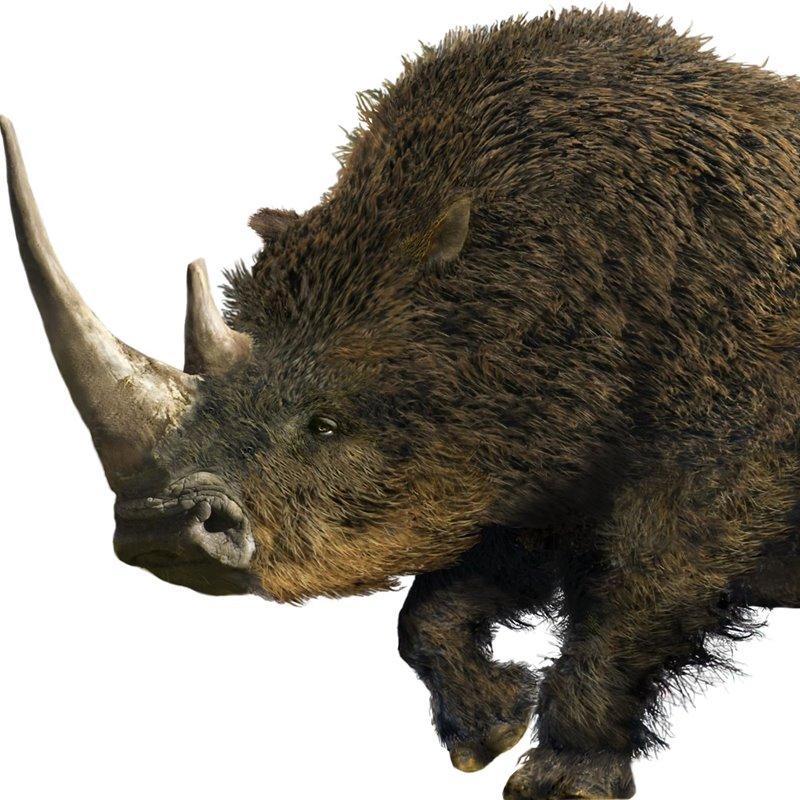 Encontrado un rinoceronte lanudo en perfecto estado de conservación