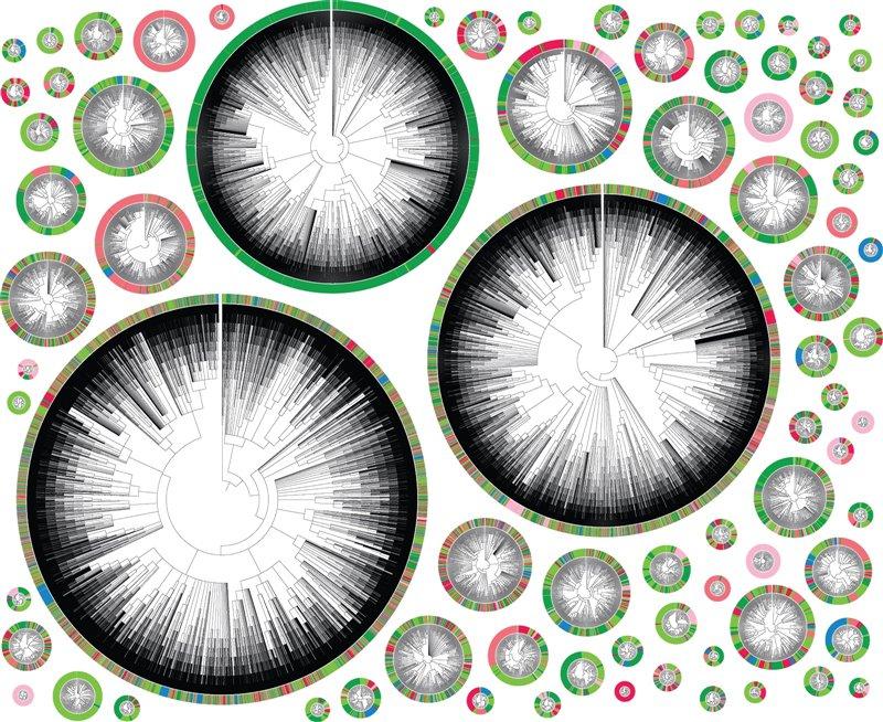 Árboles filogenéticos derivados de una célula cancerosa individual