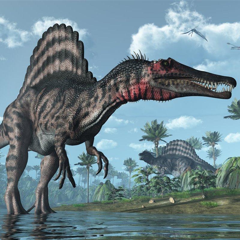 El Spinosaurus se alimentaba como un pájaro pescador, no como un reptil acuático