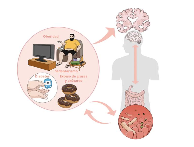 Esquema de la conexión entre los malos hábitos alimentarios, las enfermedades metabólicas, la disbiosis y patologías neurodegenerativas.