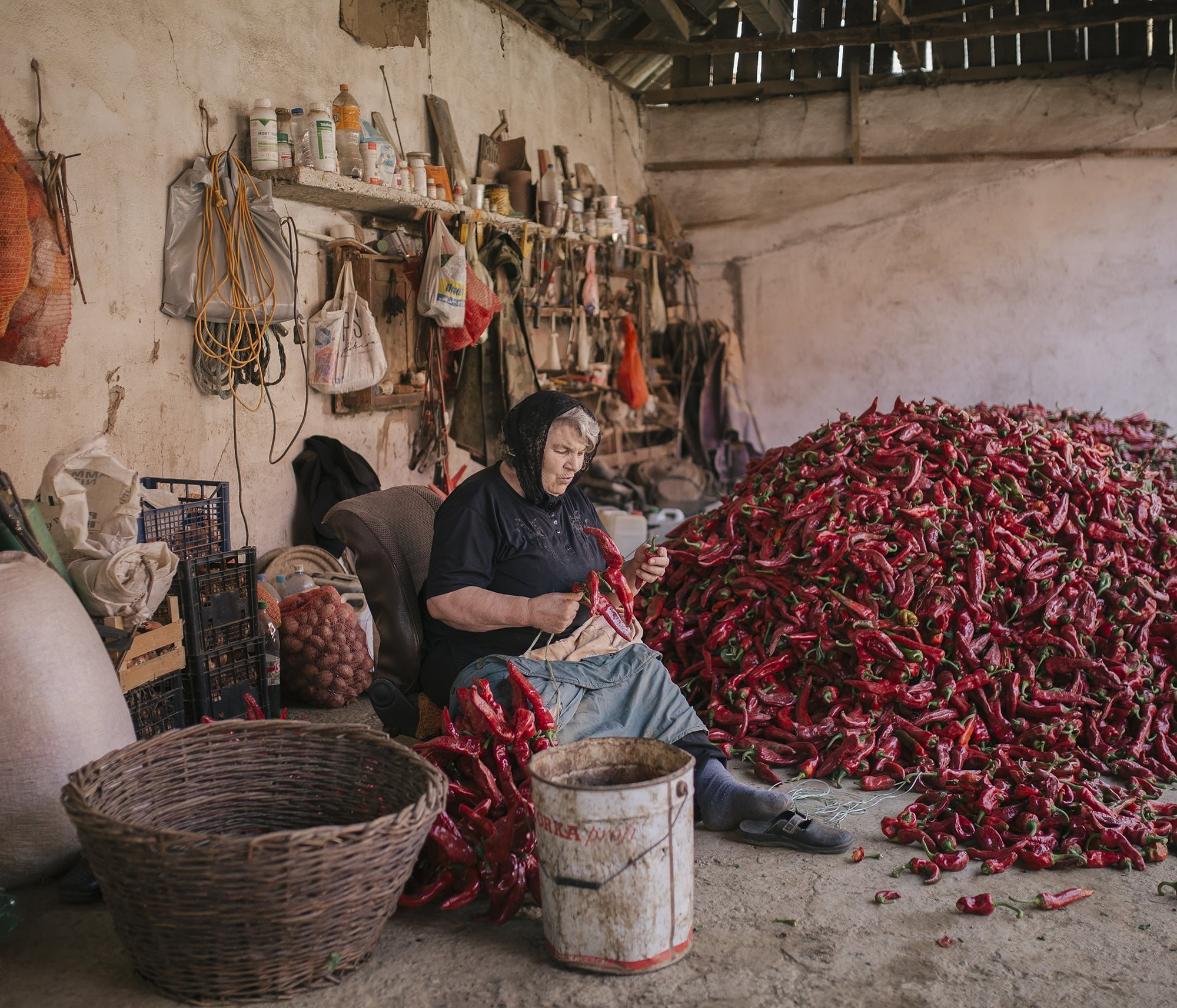 Serbia's Red Gold Pepper Harvest