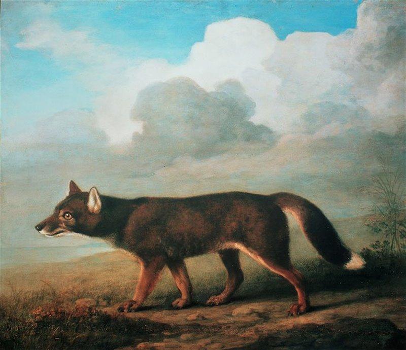 George Stubbs, 1772. Primer retrato formal de un dingo