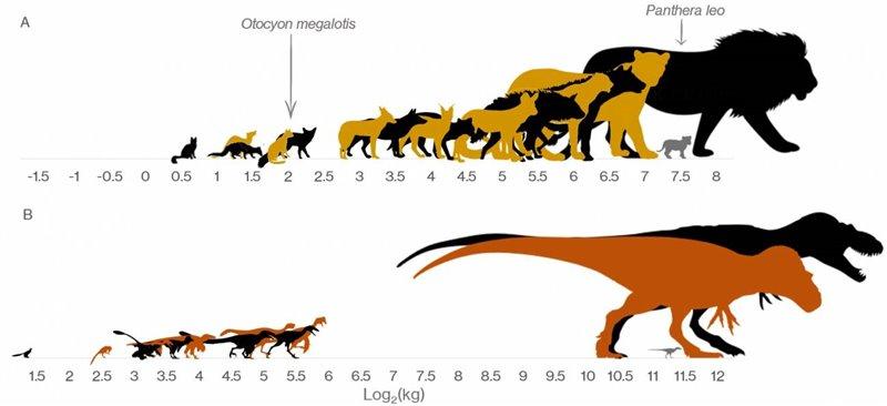 Esta infografía muestra la brecha de los dinosaurios frente a los mamíferos carnívoros modernos más grandes de Kruger.
