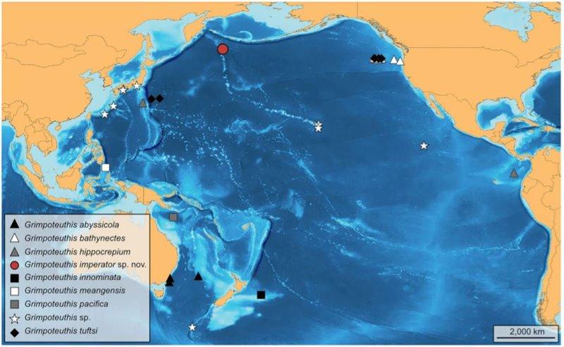 Localización geográfica de varias especies identificadas, o aún no identificadas, del género Grimpoteuthis