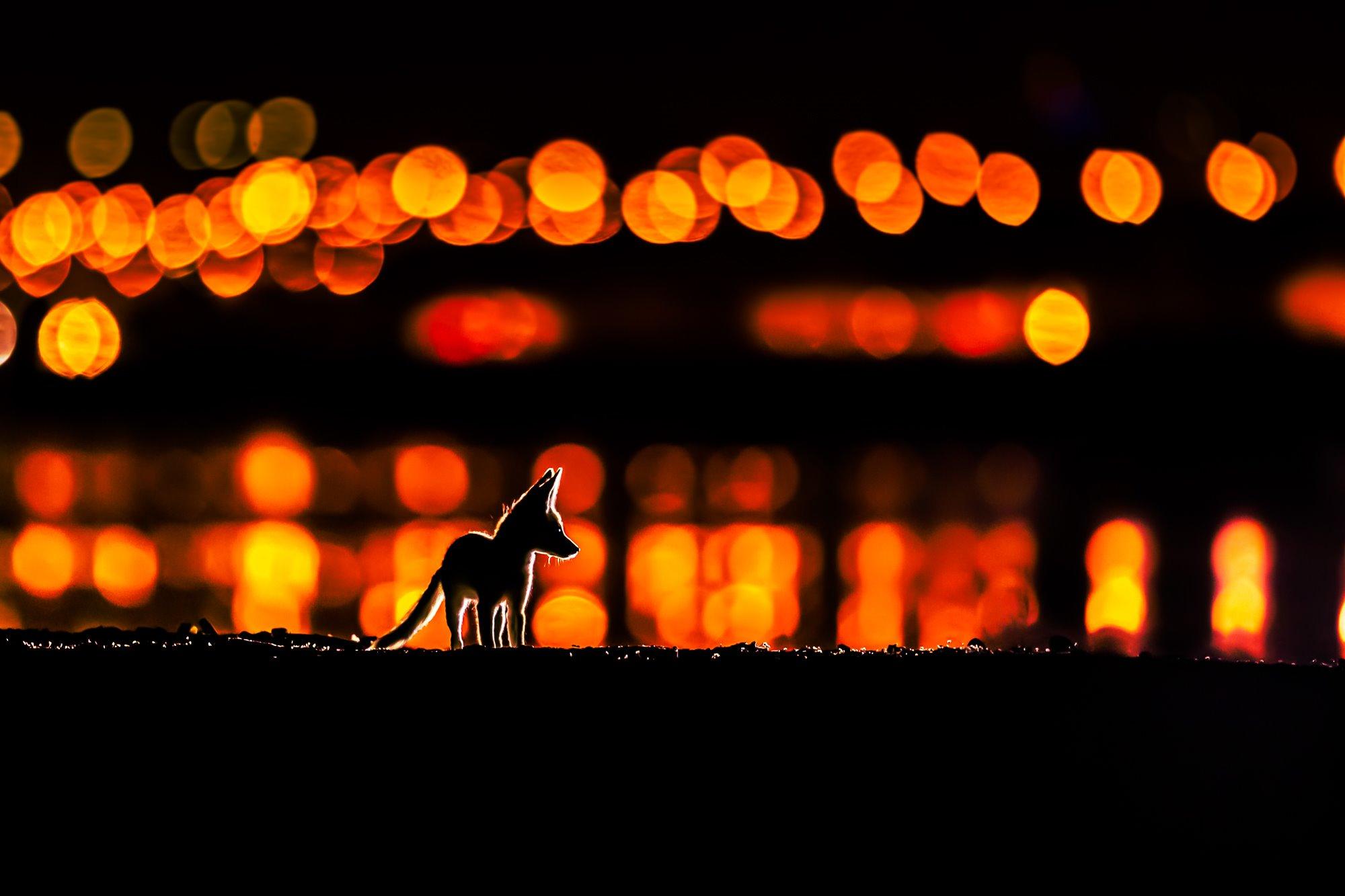 The Fox of Arabia
