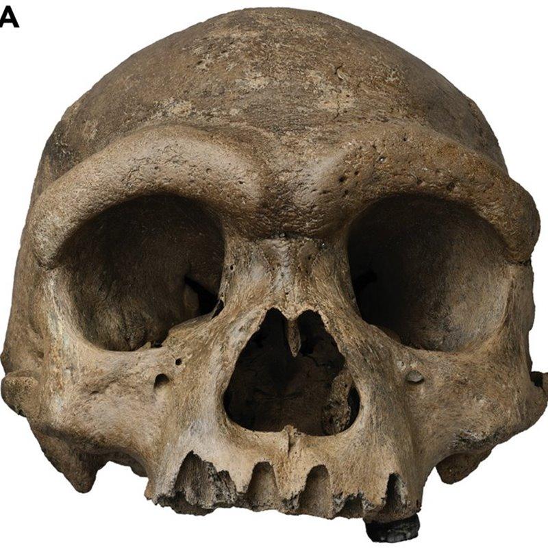 El hallazgo de nuevas especies del género Homo en Israel y en China obliga a replantear la evolución humana