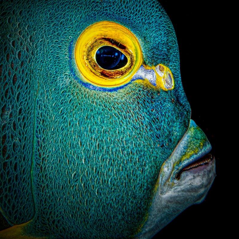 Estas son las mejores fotos submarinas del concurso Through Your Lens